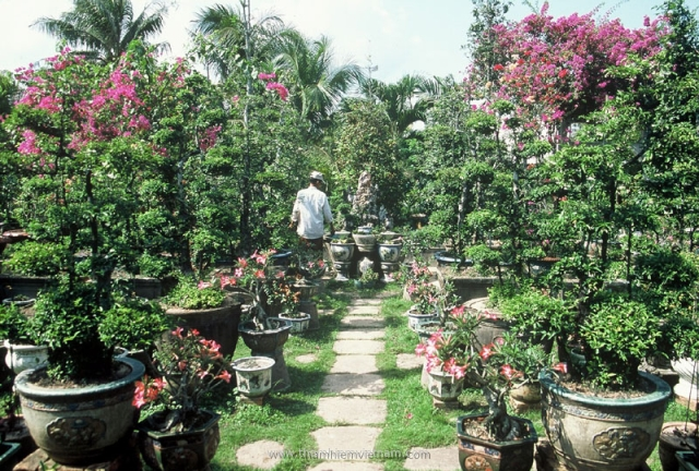 Bonsai trees decorated at home in Mekong delta Vietnam