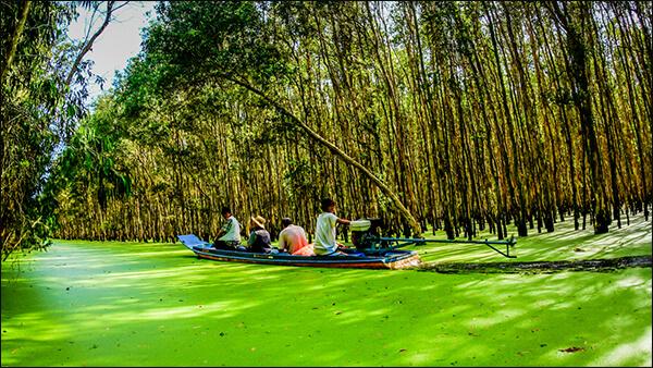 Tra Su Forest - Chau Doc