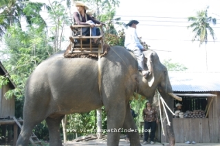 Elephant Race in Tay Nguyen